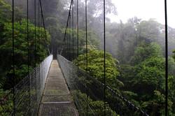 Rainforest Suspension Bridge  2014-12-31-10:12:27