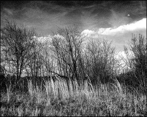 BROS grasslands B:W2.jpg