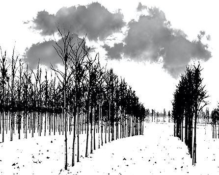 SNOWY TREE FARM.jpg