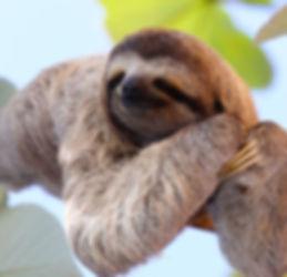 new sloth.jpg