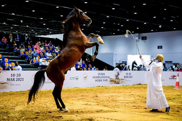 Dubai International Horse Fair 2022- Bookings Open!