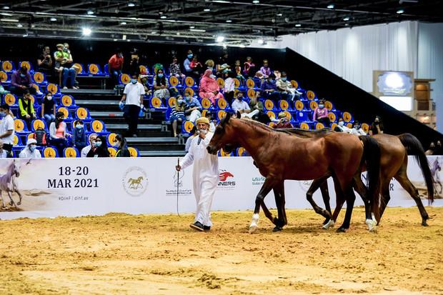Dubai International Horse Fair-2021