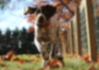 running_dog_cropped.jpg