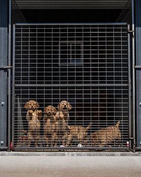 puppymill1.jpg
