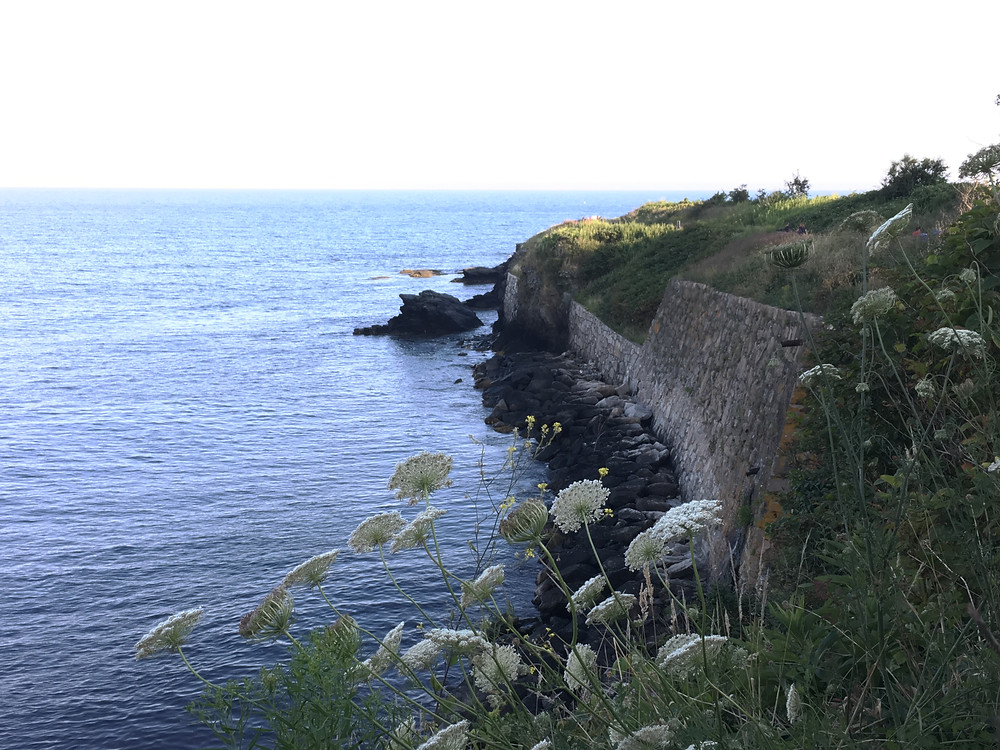 CLiff Walk Newport Rhode Island, White Queen Anne's Lace flowers against a stone wall facing the blue water