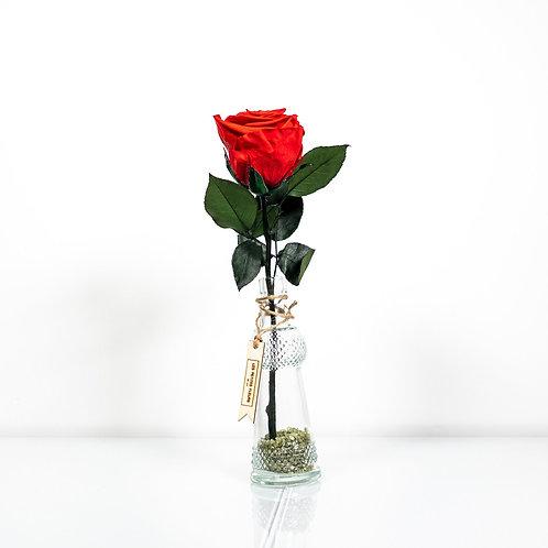 Love Message mit 1 Infinity Rose