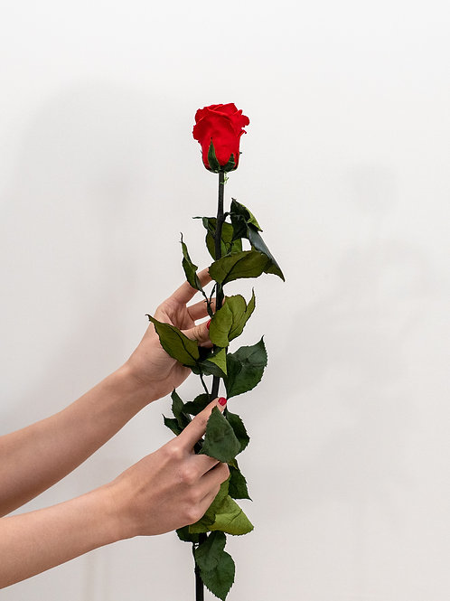 Einzelne Infinity Rose