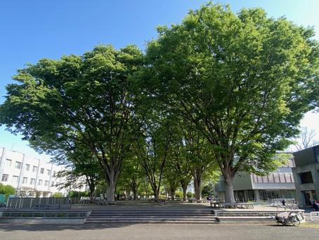 ケヤキ広場        2021年5月