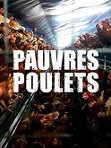 pauvres_poulets_une_geopolitique_de_l_oe