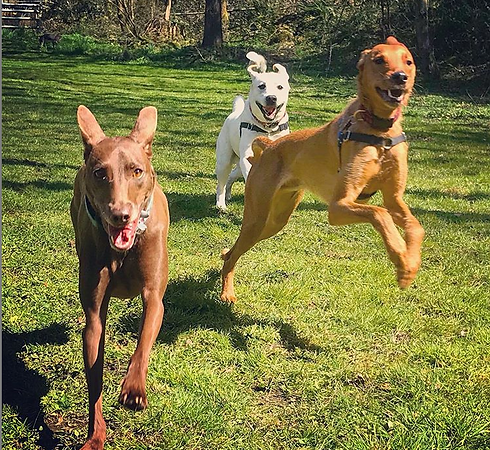 jumping dogs.PNG