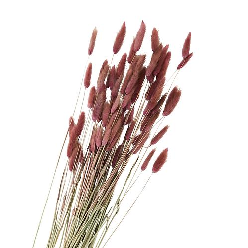 """Bouquet de fleurs sèches """"Lagurus ovatus"""""""