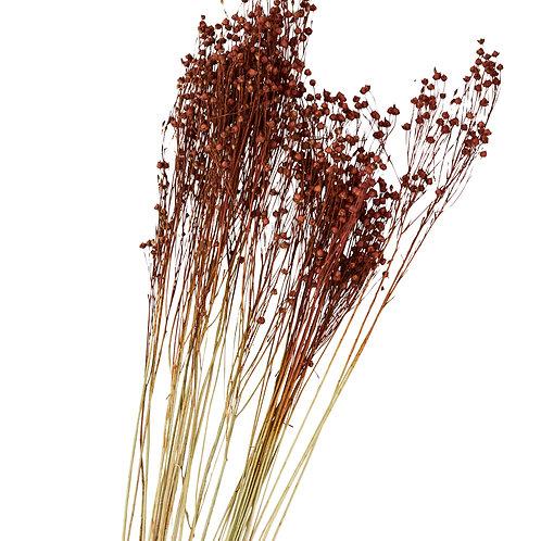 "Bouquet de fleurs sèches "" Linum usitatissimum """