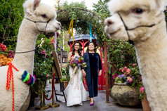 Ground_Alexandria_Atrium_GHP-16_grounds_alexandria_atrium_sydney_wedding_photography_alpaca_peruvian_1500
