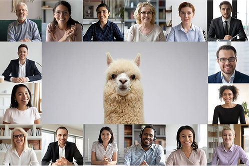 Alpaca Cameo (Large Group Video Call)