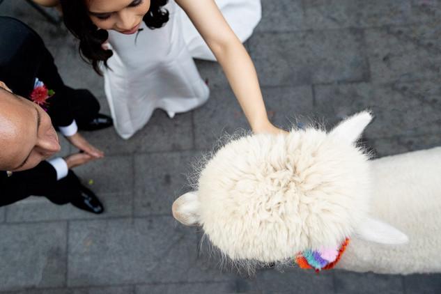 Ground_Alexandria_Atrium_GHP-42_grounds_alexandria_atrium_sydney_wedding_photography_alpaca_1500