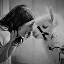 Alpaca Kisses