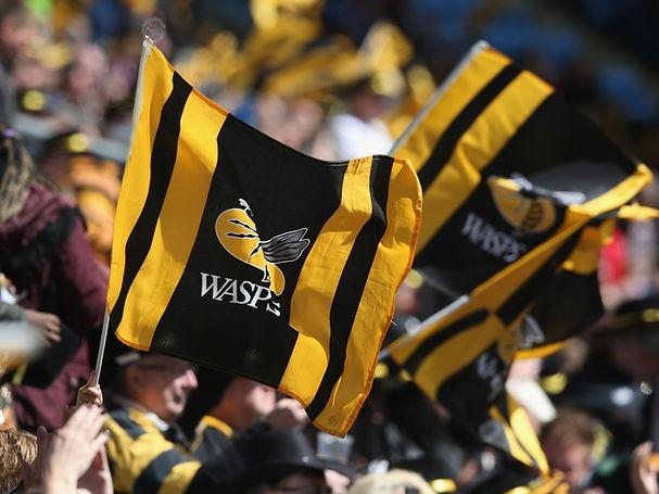 wasps2.jpg
