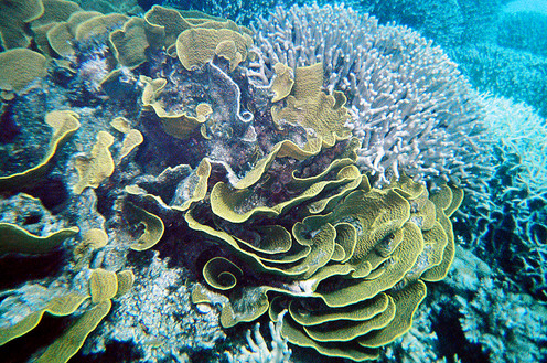 Cairne and Barrier Reef