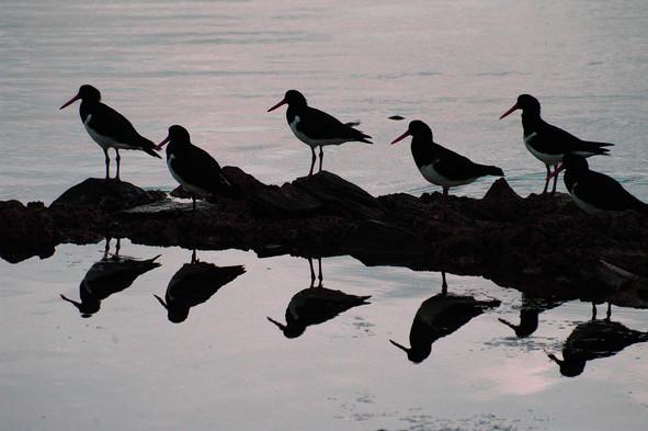 "Bird ""Stick"""