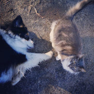 Cats and dogs.jpg