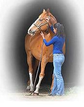 horserider_img1.jpg