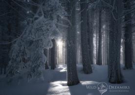 crystal-forest-firma-copia.jpg