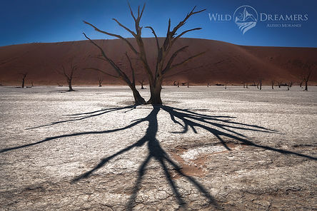 deadvlei-wild-1200 copia.jpg