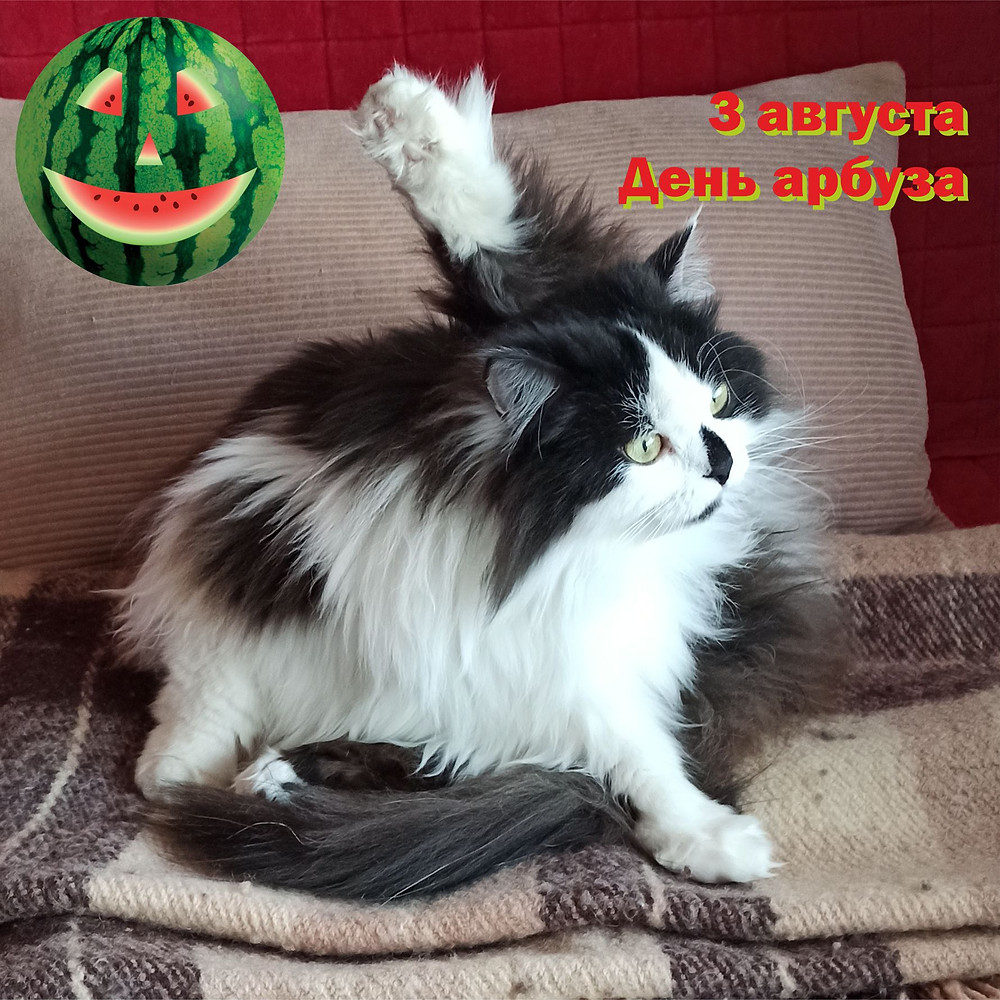 03 августа 2020 г. День арбуза (Watermelon Day)