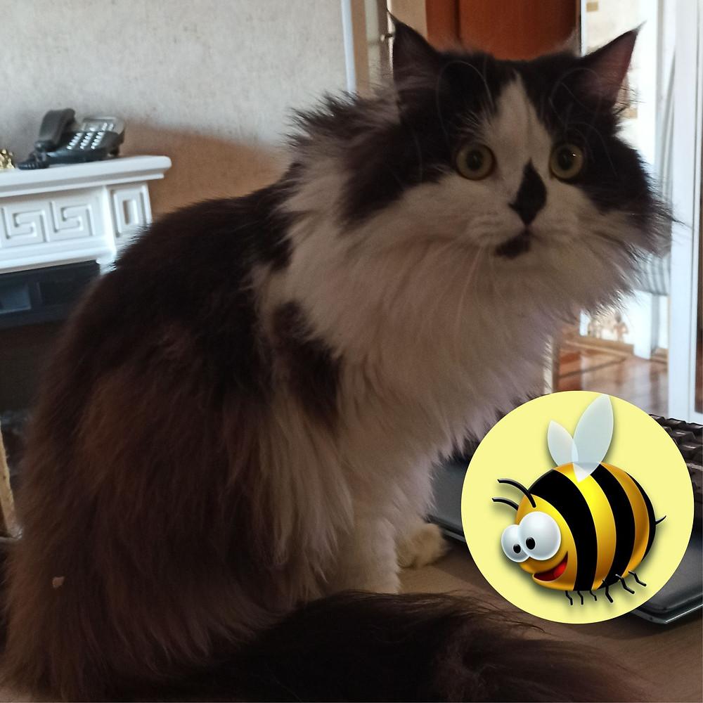 20 мая 2020 г. Всемирный день пчел