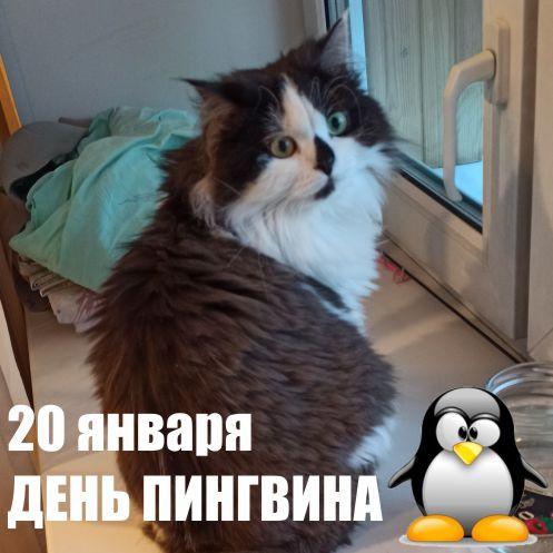 20 января 2021 г. День осведомленности о пингвинах
