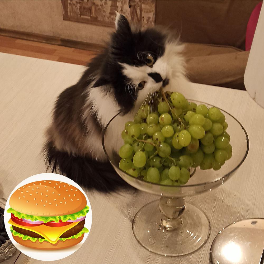27 июля 2020 г. 120 лет назад День рождения гамбургера (в Нью-Хейвене /США/ продан первый гамбургер в мире)