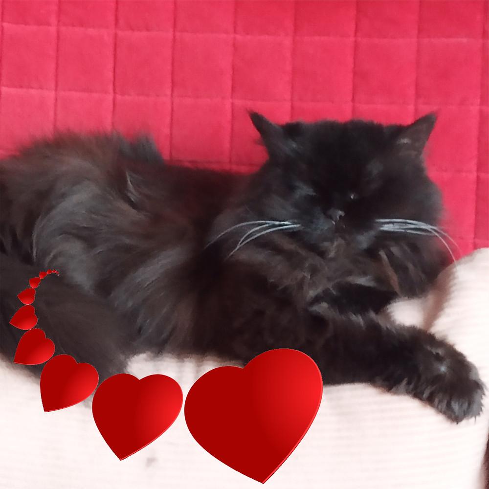 14 февраля 2020 г. День святого Валентина (День всех влюбленных)