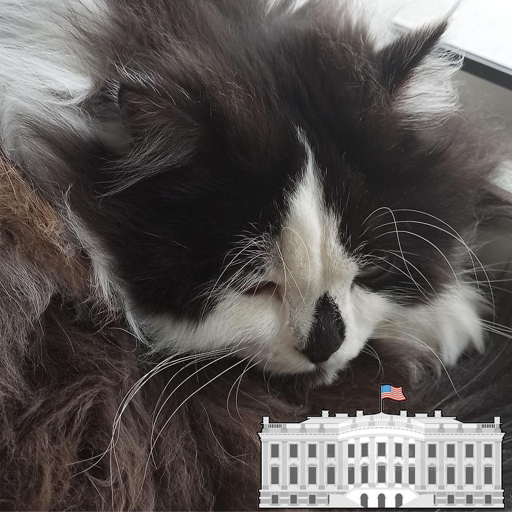 04 июня 2020 г. 220 лет назад Завершилось строительство Белого дома в Вашингтоне