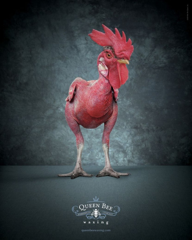 Реклама спа-салона Qeen Bee Waxing от агентства Hanlon