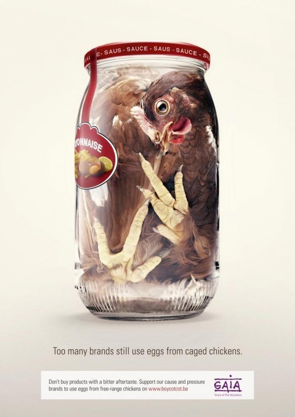 Социальная реклама от бельгийской правозащитной организации GAIA. Направлена на привлечение внимания содержания кур-несушек, вынужденных всю жизнь сидеть в тесных клетках в неподвижном состоянии.