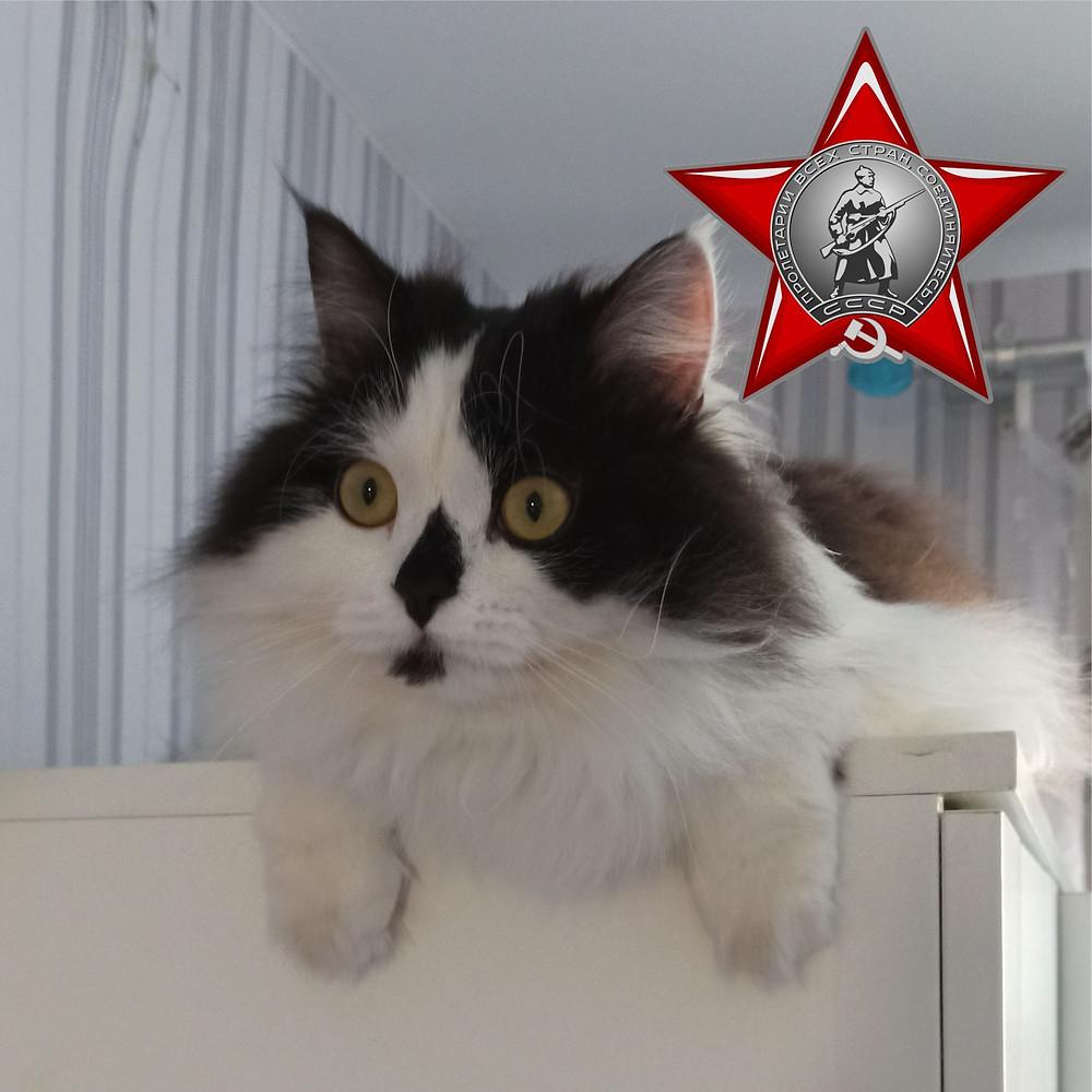 90 лет назад  Учрежден Орден Красной Звезды – одна из самых массовых наград Великой Отечественной войны