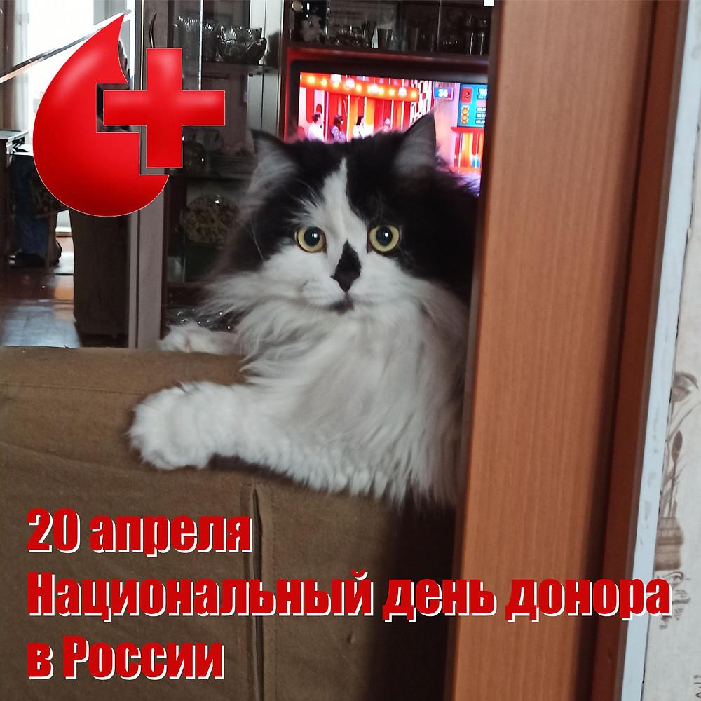 20 апреля 2021 г. Национальный день донора в России