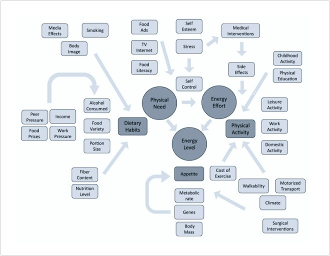 Чтобы решить проблему ожирения, ученые США используют знания из биологии, генетики, психологии и других областей