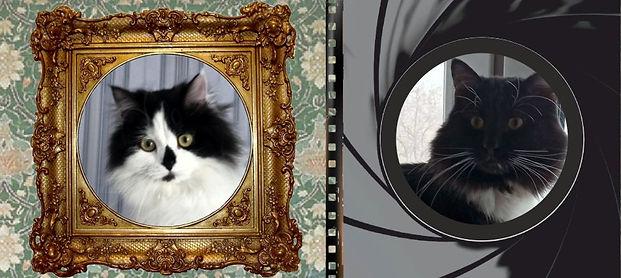 Котейки.jpg
