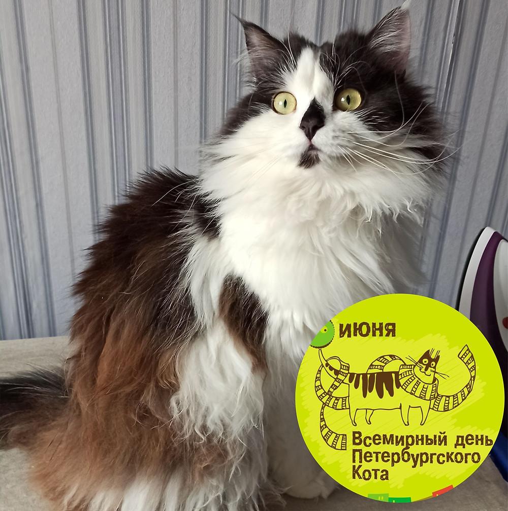 08 июня 2020 г. Всемирный день петербургских котов и кошек