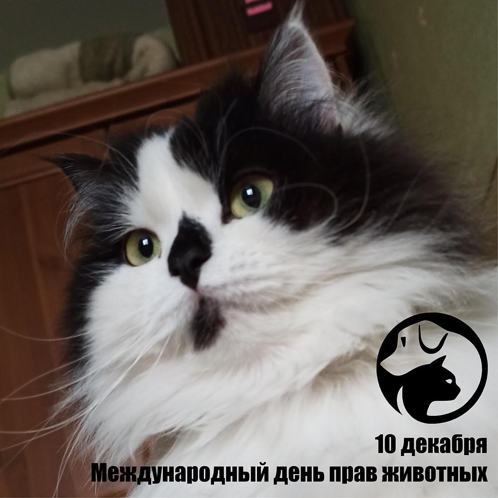 10 декабря 2020 г. Международный день прав животных