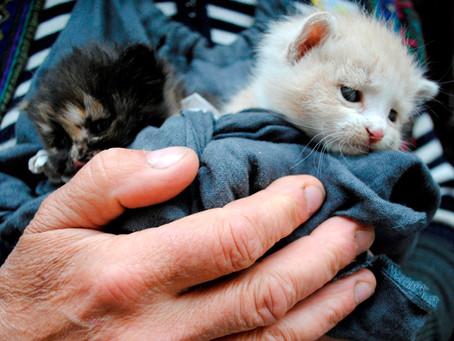 """Животные они вам не """"тварь дрожащая"""". Они тоже право имеют."""