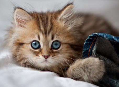 Почему... мы так любим картинки с котиками?