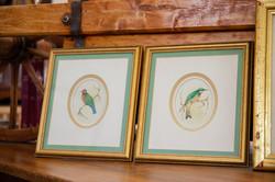 Victorian Water Colour Birds