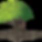 גיזום עצים,  גיזום עץ, כריתת עצים, כריתת עץ, גיזום דקלים, ניקוי דקלים, גיזום וכריתת עצים, כריתה וגיזום עצים