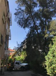 גיזום עצים עם מנוף בבניין משותף