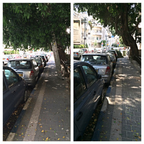 גיזום פיקוס בתל אביב