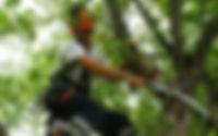 גיזום עצים, גוזם עצים, גיזום וכריתת עצים, גוזמי עצים, גזימת עצים, גיזום עצים מחיר