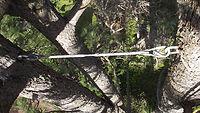 תמיכה לעצים, תמיכת ענפים, קשירת ענפים, קשירת עצים, שיקום עצים,