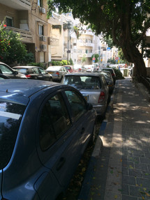 גיזום פיקוס בתל אביב - אחרי